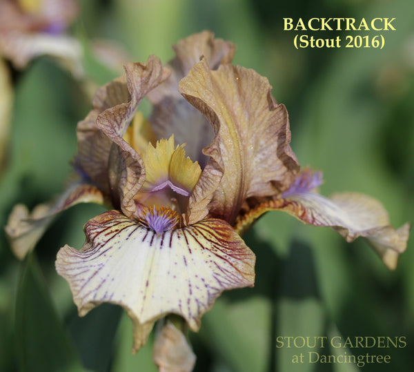 *Iris BACKTRACK