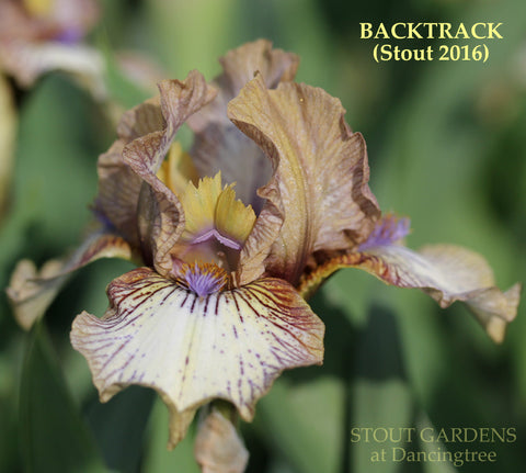 Iris BACKTRACK