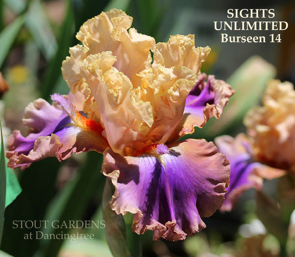 Iris Sights Unlimited
