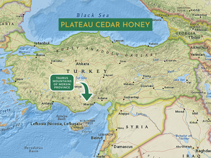PLATEAU CEDAR HONEY - RAW
