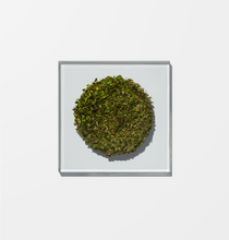 Load image into Gallery viewer, Verbena Herbal Tea