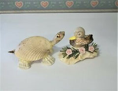 une Tortue coquillages