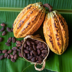 benefits of having cacao