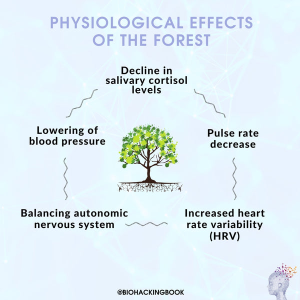 effects of the forest