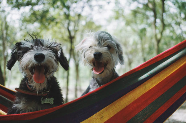 Top 5 Dog-Friendly Resorts In Bangalore