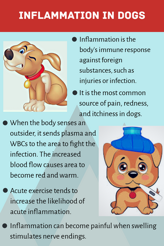 What Is Inflammation in Dogs?