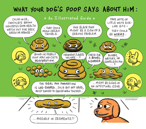 Dog Poop Consistency Chart