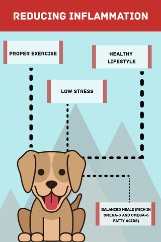 Reducing Inflammation in Dogs