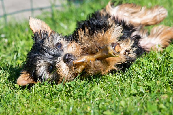 Is Rice Good for Your Dog's Health?, dog lying down