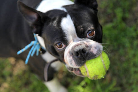 Playing catch with your dog as indoor activity