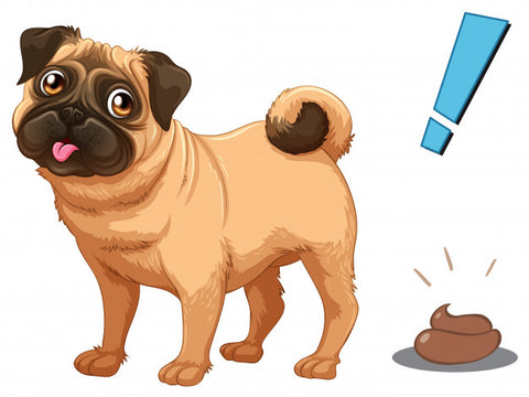 Decoding Your Dog's Poop