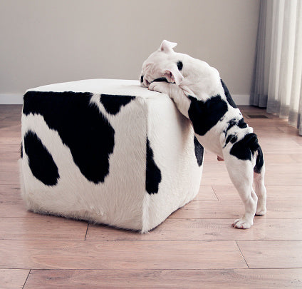 Hidden Treasure as an indoor activity to do with your dog