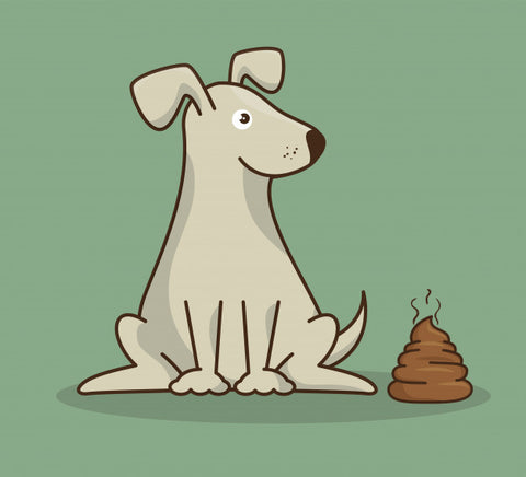 How To Decode Your Dog's Poop