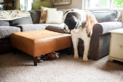 Hide and seek with dog as indoor activity