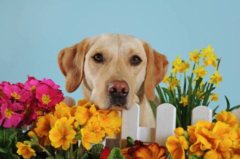 Photoshoot with your dog as indoor activity
