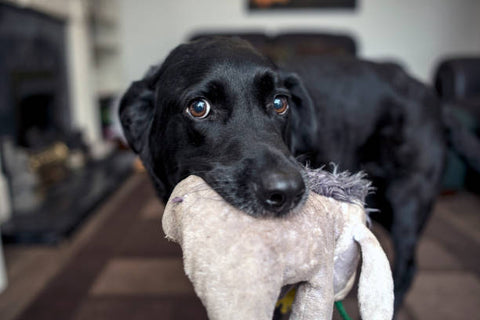 teach your dog to put their toys in a box or basket