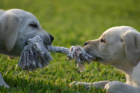 Tug-of-War with your dog as indoor activity