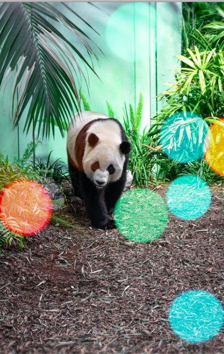Panda Orb by Irina Irina - The Diamond Painting Factory
