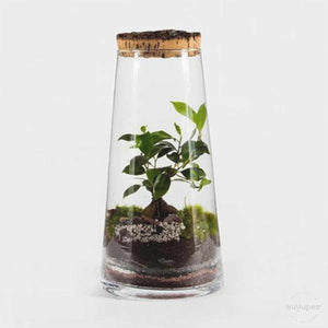 CORK FOREST TERRARIUM
