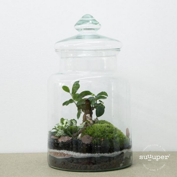 MEDIUM FOREST TERRARIUM