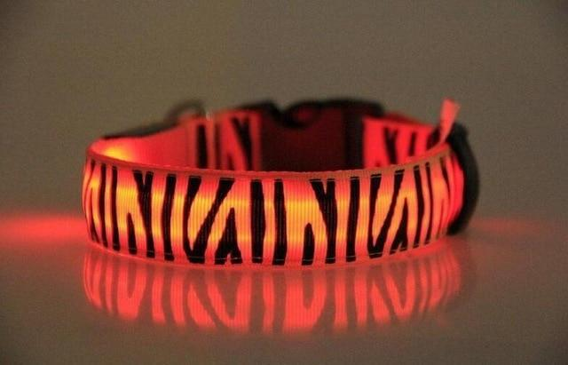 Zebra print luminous safety collar Pets ThinkThingz