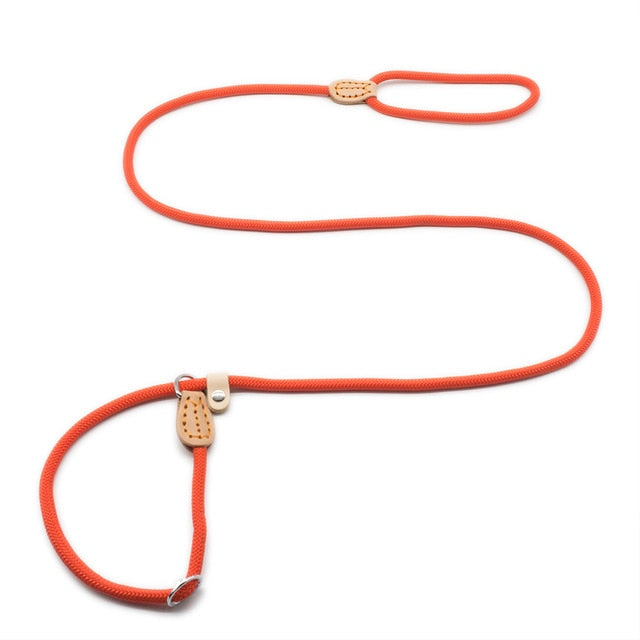 Dog Slip Leash Collar