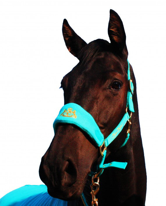 Equine England Headcollar & Leadrope Set