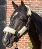 LeMieux Leather Headcollar with Lambskin