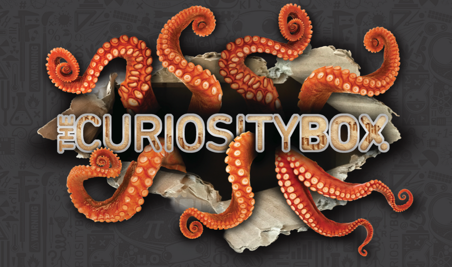 Everything Inside The Summer Curiosity Box