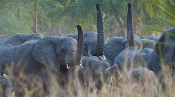 Elephant Facts: 9 Things to Know About African Elephants