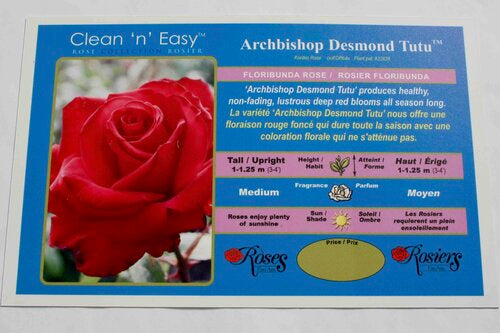 Archbishop Desmond Tutu Rose Bushes