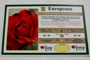 Europeana Rose Bushes
