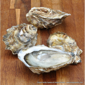 Live Oyster Shell (XL) each