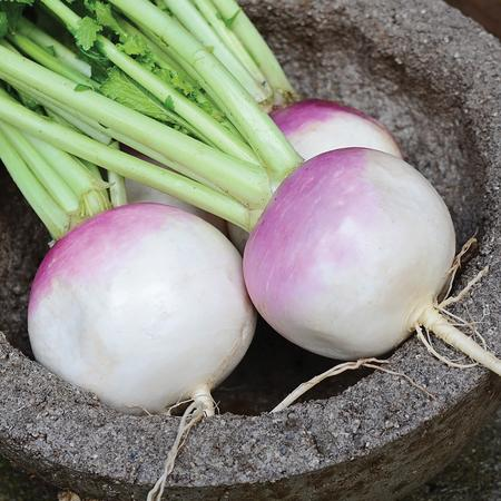 Turnips, Purple Top-  3  per order