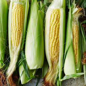 Corn Sweet 8EA