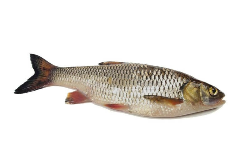 Whole Fresh Grass Carp  1 kg