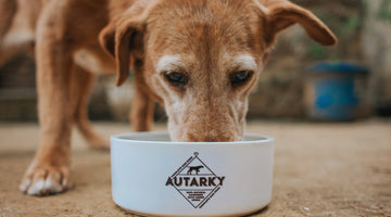 A guide to feeding your older dog