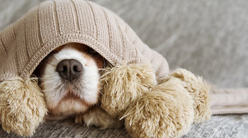 5 tips to keep your dog safe and sound this Bonfire Night