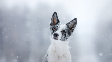 6 ways to keep your active dog happy & healthy this winter