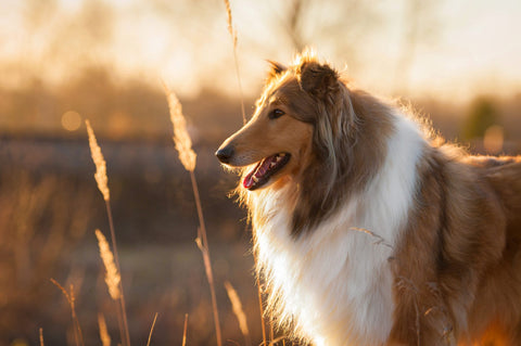 dog nutrition for healthy skin and hair coat
