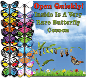 Rare Cocoon Butterfly greeting card with wind up flying butterfly from butterflyers.com