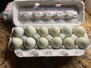 One Dozen Green Large Chicken Eggs