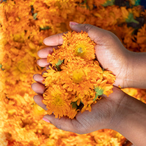 Fresh organic calendula flowers to nourish and moisturize the skin