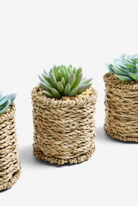 Set of 3 Artificial Succulents in Woven Pots - iBuy Africa