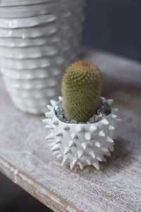 Cacti Ceramic Spiked Pot Small