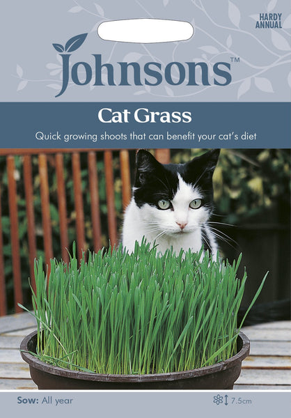 CAT GRASS - Avena sativa
