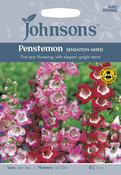 PENSTEMON Sensation Mixed