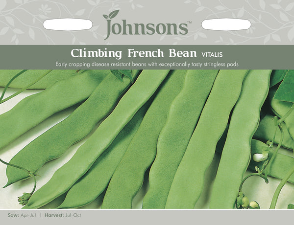 CLIMBING FRENCH BEAN Vitalis