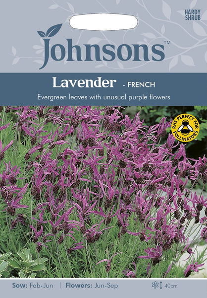 LAVENDER French