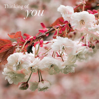 Thinking of You Card -Cherry Blossom-